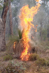Not all fire experts come up with the same flammability ratings for all plants